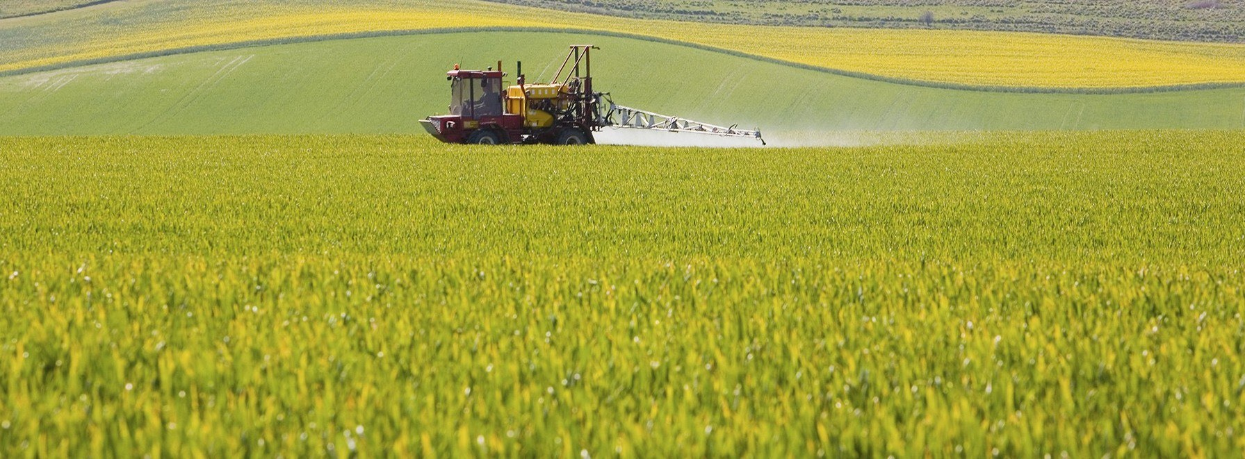 Spraying oilseed rape (2)